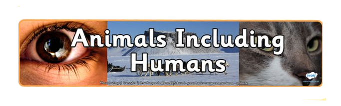 animals-including-humans-banner