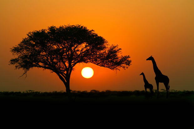 Top_Destinations_2014_Africa_620-20221